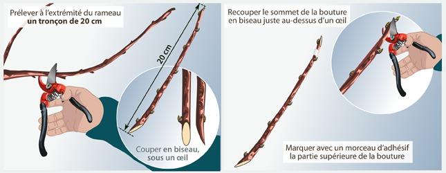 Faire une bouture ligneuse ooreka - Quand tailler un prunier ...