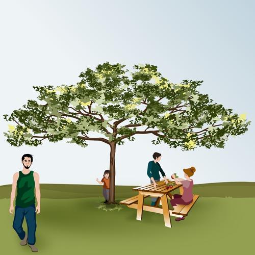 Taille en tonnelle des arbres