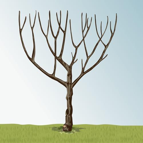 Donner une forme en gobelet à un arbre