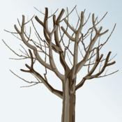 taille de rajeunissement pour un arbre fruitier ooreka. Black Bedroom Furniture Sets. Home Design Ideas