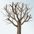 Taille de rajeunissement pour un arbre