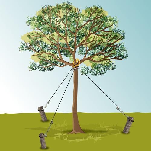 Haubaner un arbre