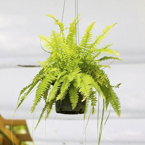 Quelles Plantes Pour La Salle De Bain Ooreka