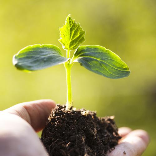 Créer un jardin écologique