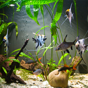 Réussir l'installation d'un aquarium
