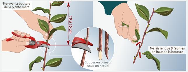Faire une bouture jardinage - Comment faire des aubergines grillees ...