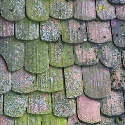 Traitement anti-mousse d'une toiture