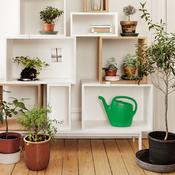 loigner les moucherons des plantes ooreka. Black Bedroom Furniture Sets. Home Design Ideas