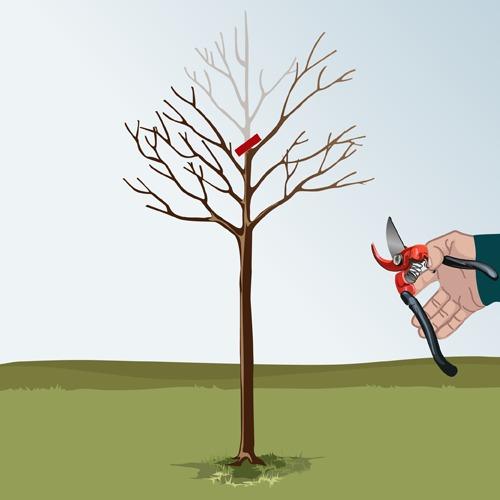 Étêter un arbre