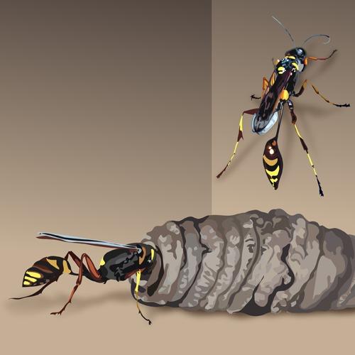 cocon insecte dans maison ventana blog. Black Bedroom Furniture Sets. Home Design Ideas