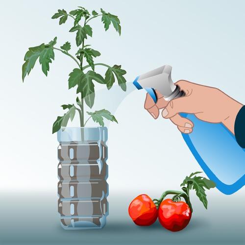 Semer des tomates en bouteille