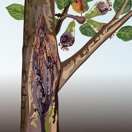 Lutter contre la bactériose à pseudomonas des fruitiers