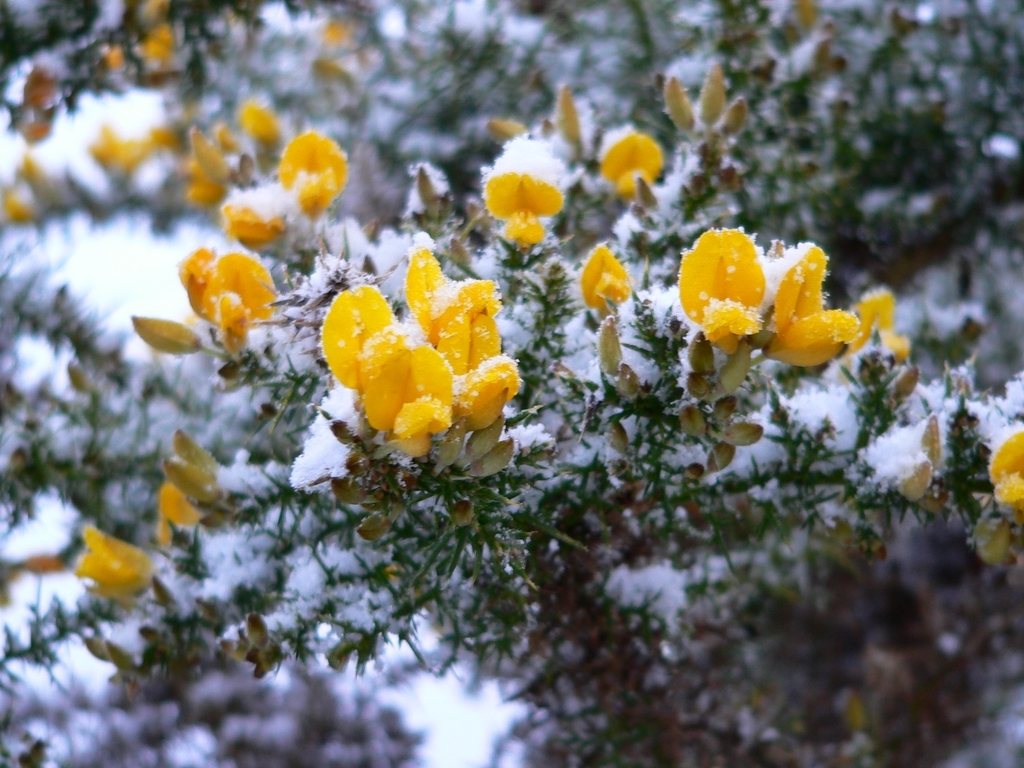 arbuste floraison hivernale liste ooreka