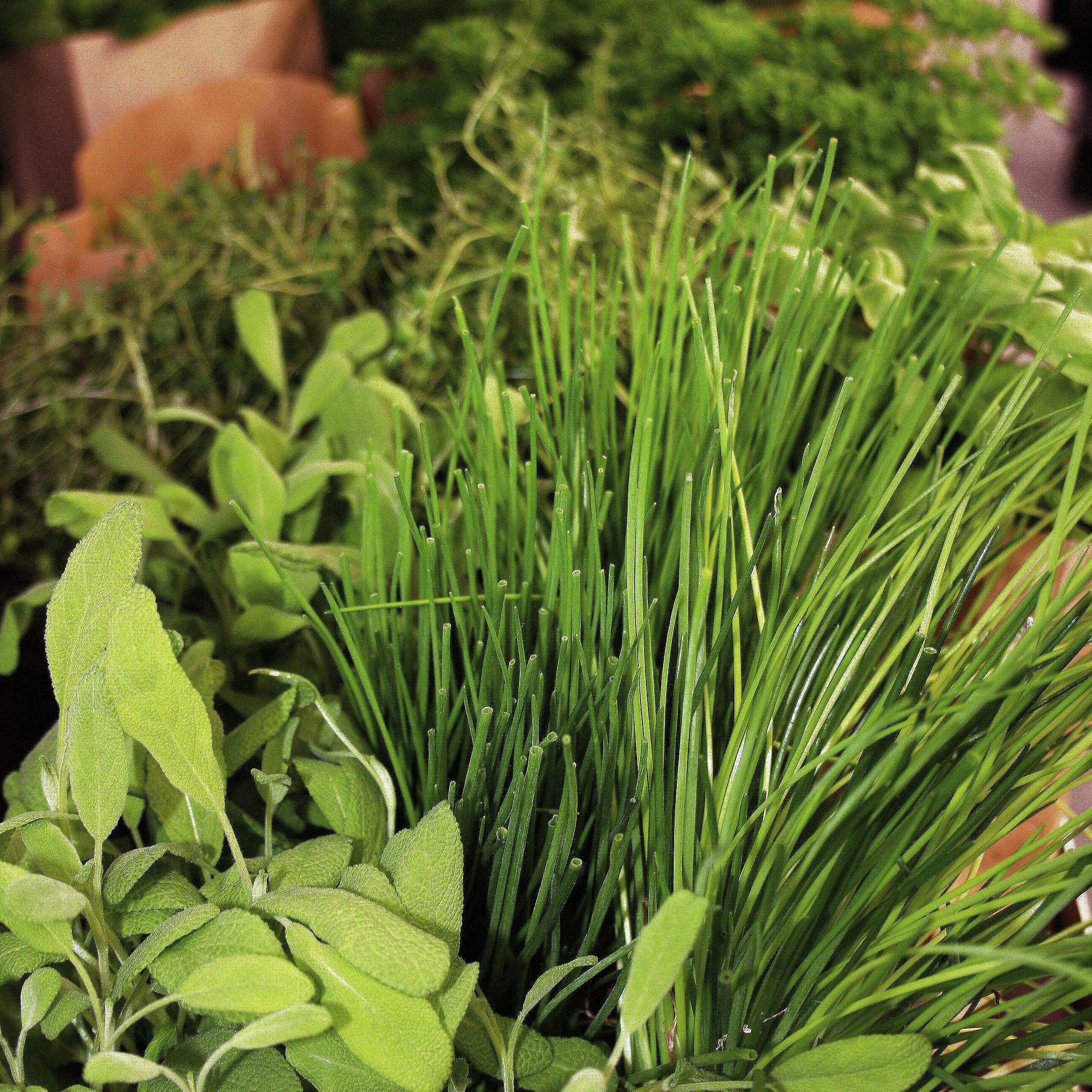 Les Plantes Aromatiques Vivaces Ooreka