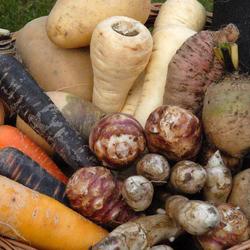 10 légumes anciens et oubliés