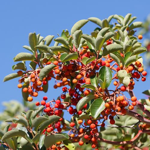 Que planter en septembre un gros arbre atteindra une - Quel arbuste planter en octobre ...