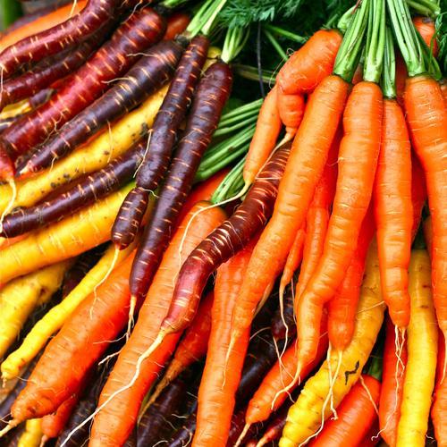 Faire cuire des carottes