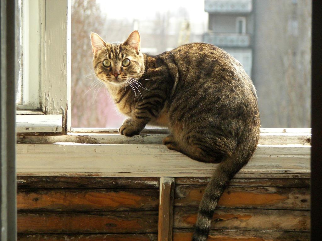 Symptômes et solutions au stress chez le chat