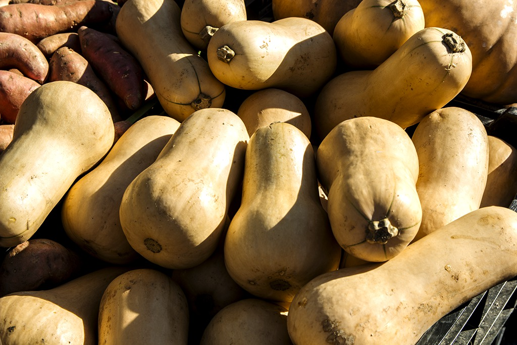 Courge butternut caract ristiques culture consommation - Comment cuisiner une courge butternut ...