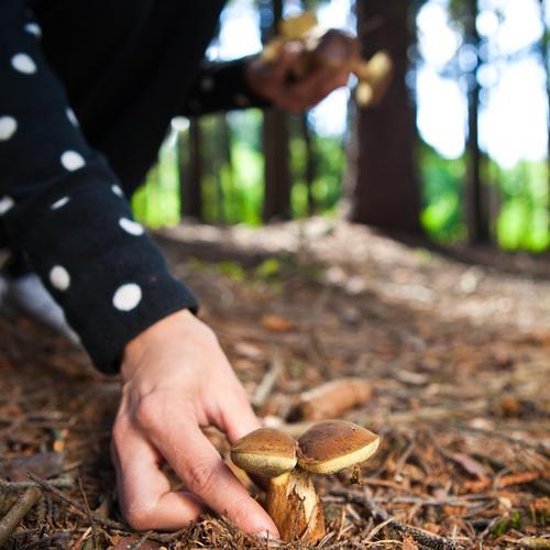 Conserver les champignons