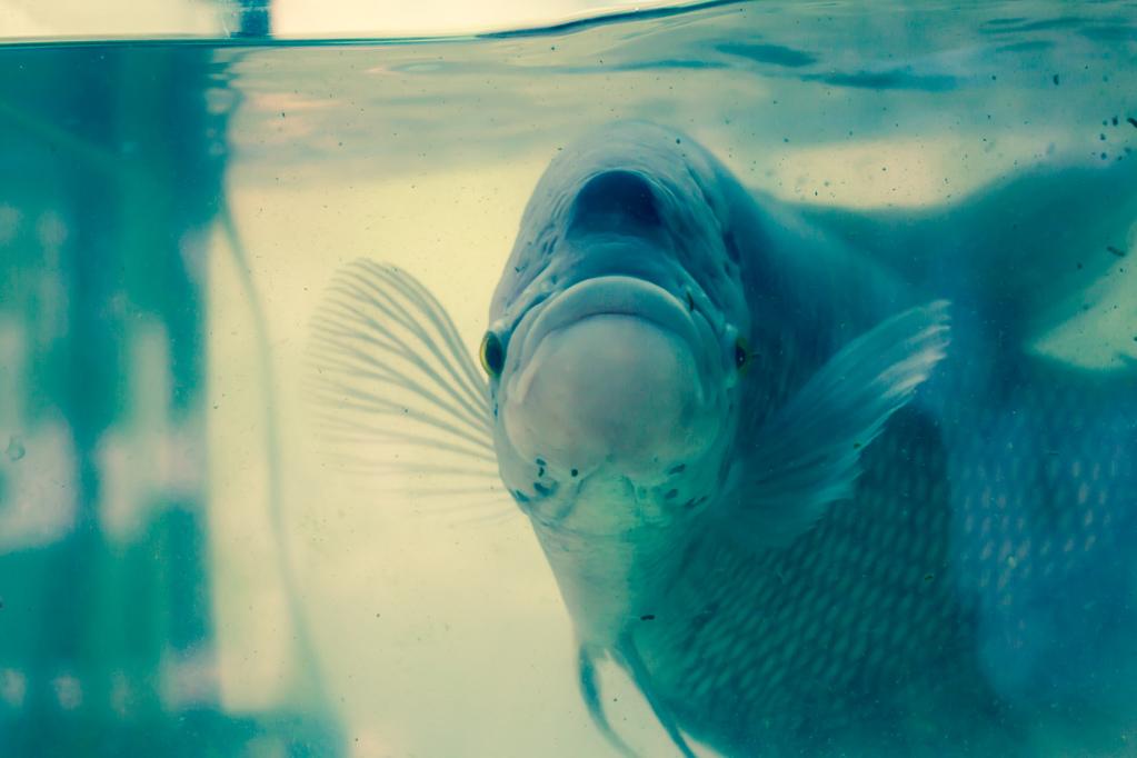 Eau trouble dans un aquarium