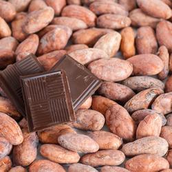 Fève de cacao