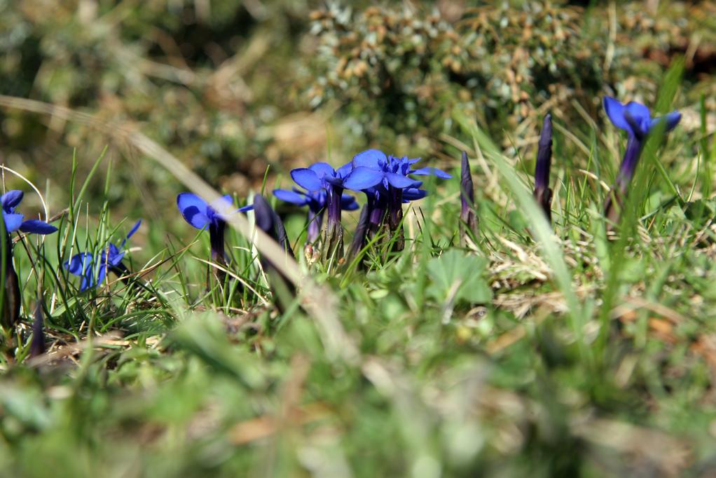 10 fleurs de montagne