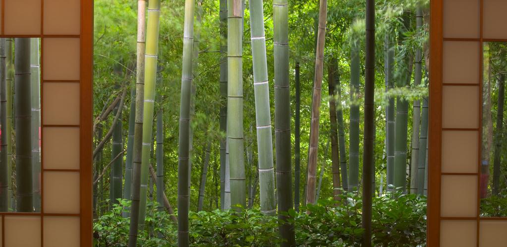 7 bambous d'intérieur
