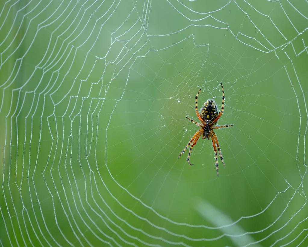 8 trucs pour reconnaître les araignées de jardin