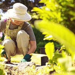 jardinage vos astuces sur page 2. Black Bedroom Furniture Sets. Home Design Ideas
