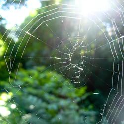 4 conseils pour développer son réseau