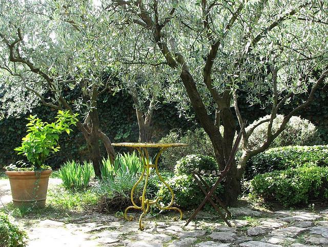 Les Arbres De Jardin