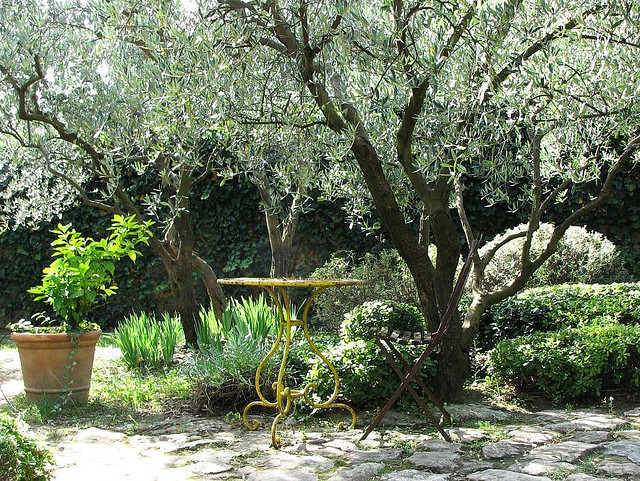 Arbre de jardin : liste - Ooreka