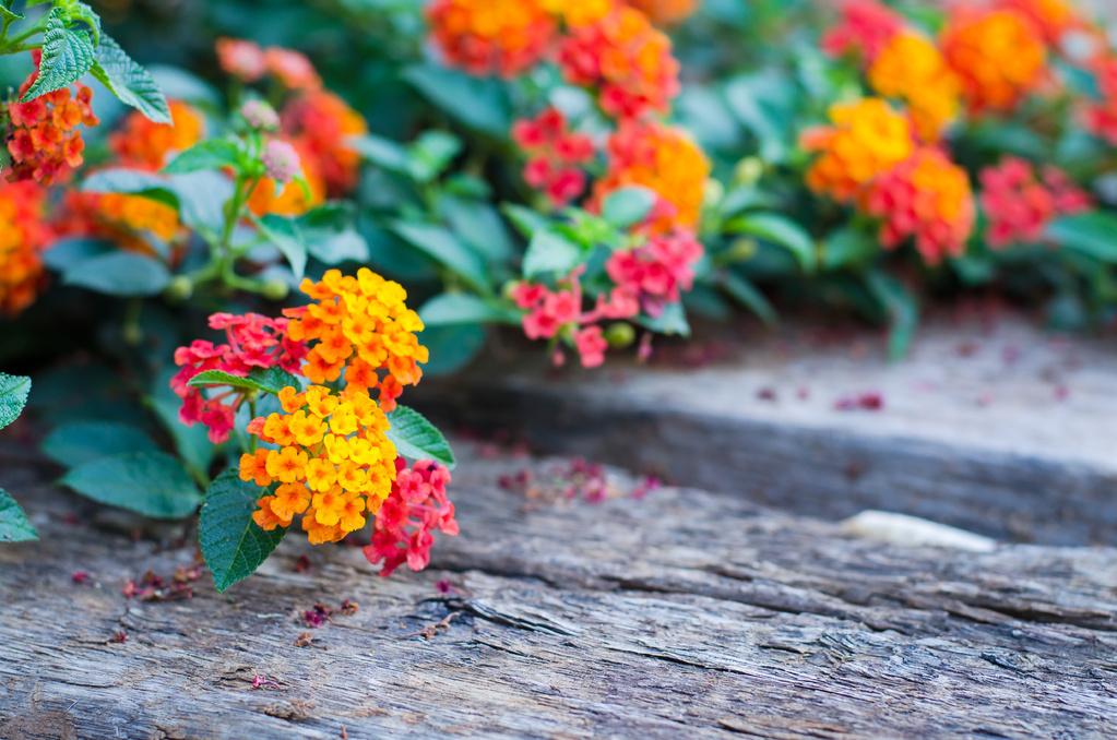 Arbuste couvre sol liste ooreka - Arbuste persistant soleil ...