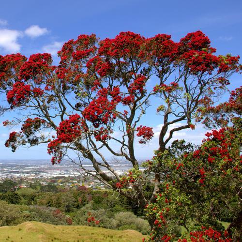 arbre à feuillage persistant : liste - ooreka