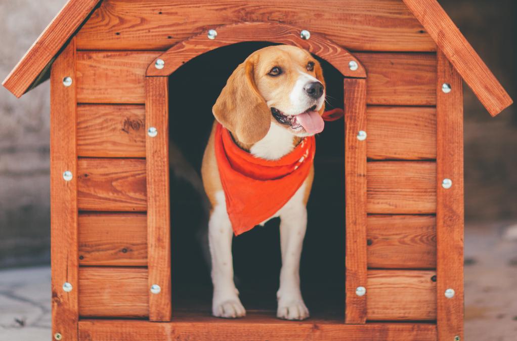 chauffage niche chien pas cher cheap niche chien exterieur abri pour chien exterieur ou comment. Black Bedroom Furniture Sets. Home Design Ideas