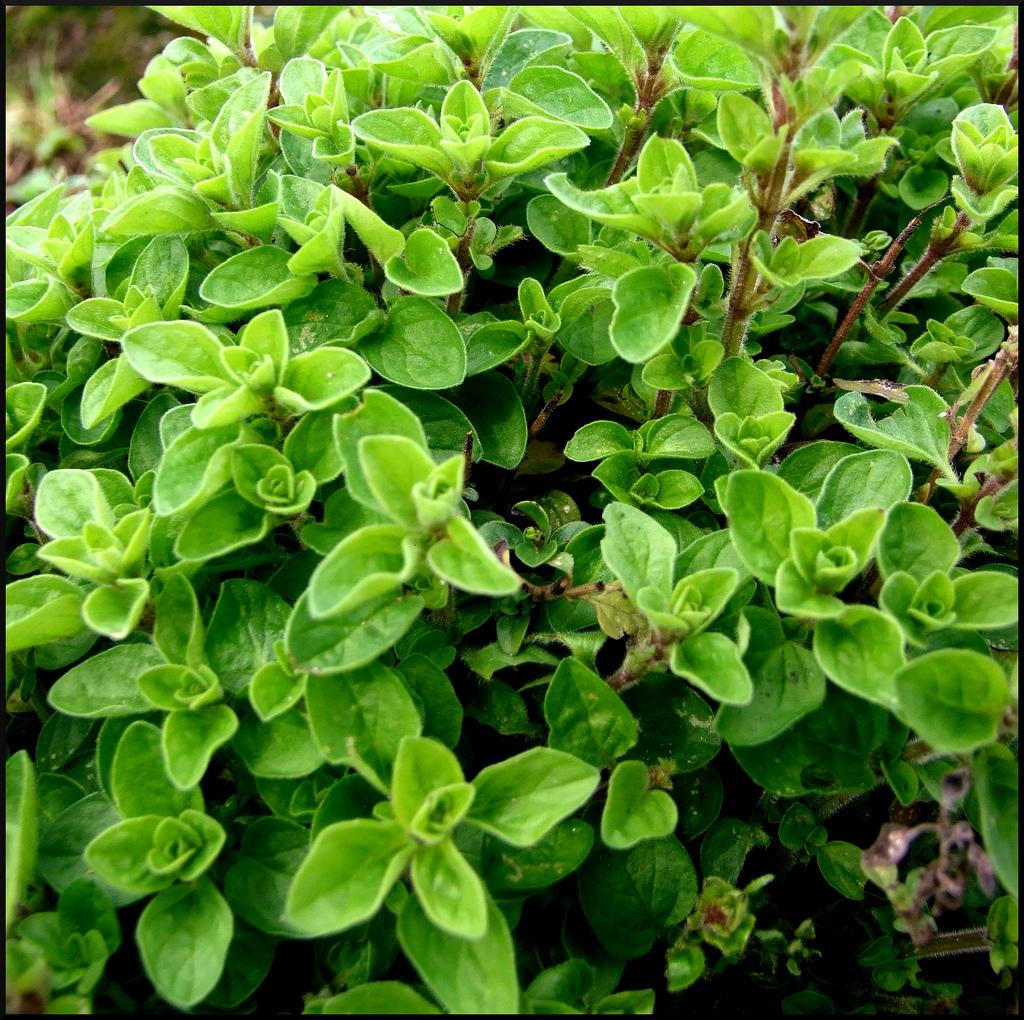 Plantes Aromatiques Sur Terrasse plante aromatique balcon : liste - ooreka