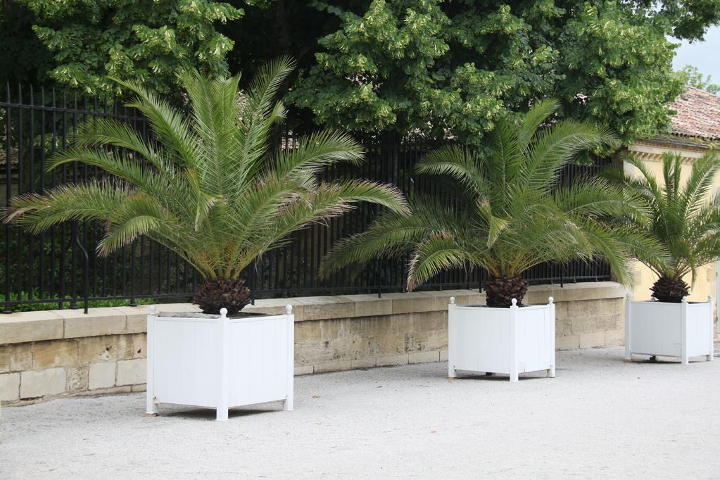 palmier pas cher