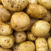 pratiquer la culture des pommes de terre sous paille ooreka. Black Bedroom Furniture Sets. Home Design Ideas