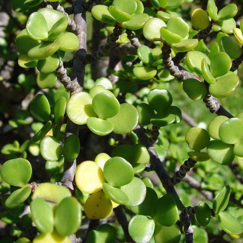 plante grasse ooreka