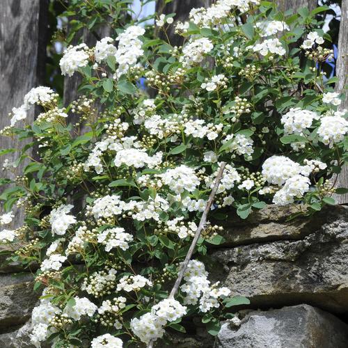 Rocaille Ombre fleur de rocaille : liste - ooreka