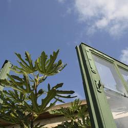 Photosynthèse des plantes