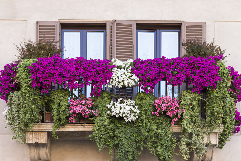 Un vrai jardin sur son balcon pour moins de 200 €