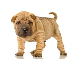 Saggy Skin Dog Breeds