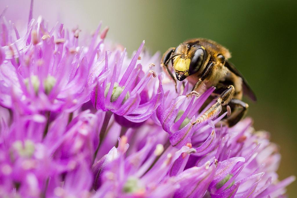7 preuves que les abeilles vont sauver le monde ruche. Black Bedroom Furniture Sets. Home Design Ideas