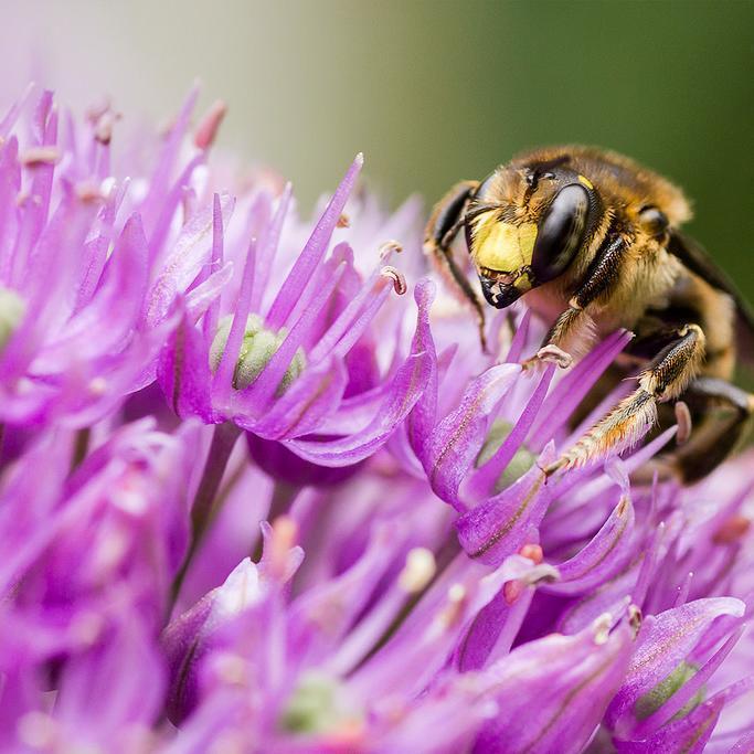 7 preuves que les abeilles vont sauver le monde