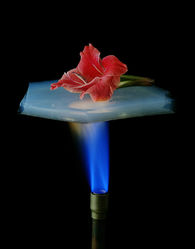 La fleur est protégée de la flamme grâce au morceau d'aérogel.