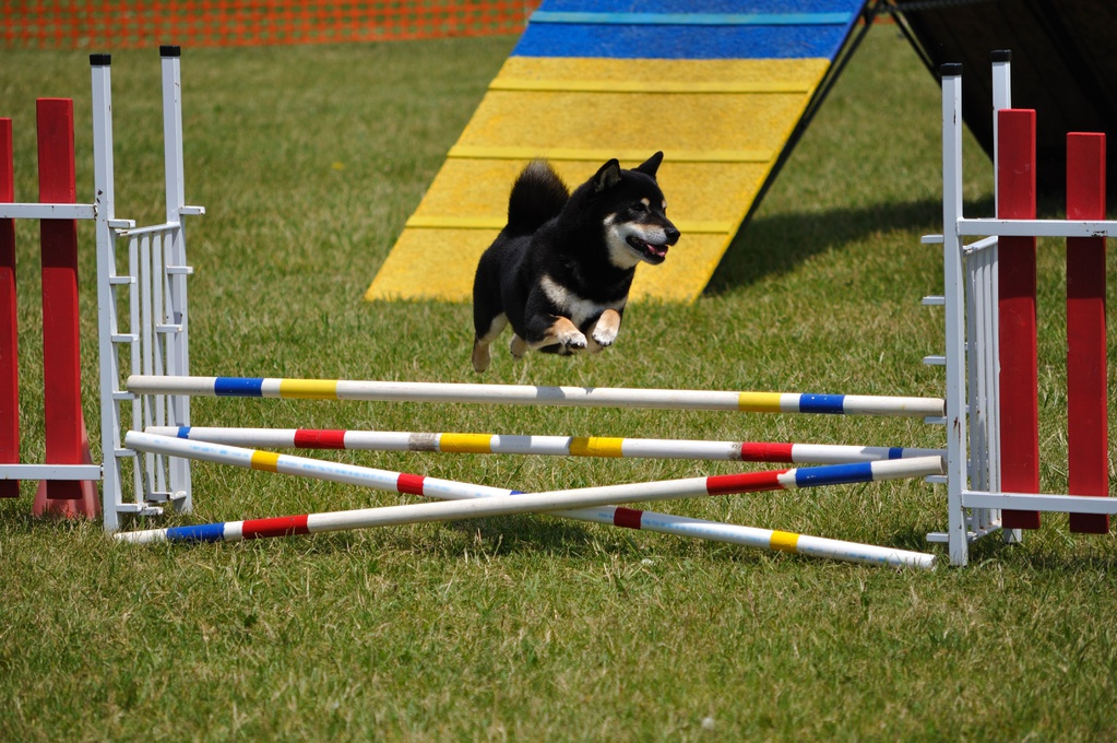 Dog Training Obstacles