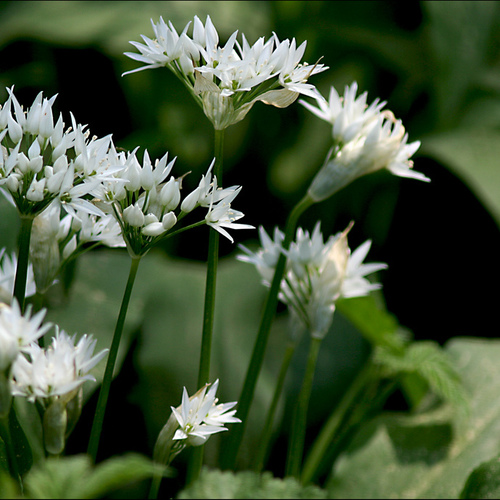 Jardin l 39 ombre quelles plantes choisir ooreka for Plantes qui poussent a l ombre