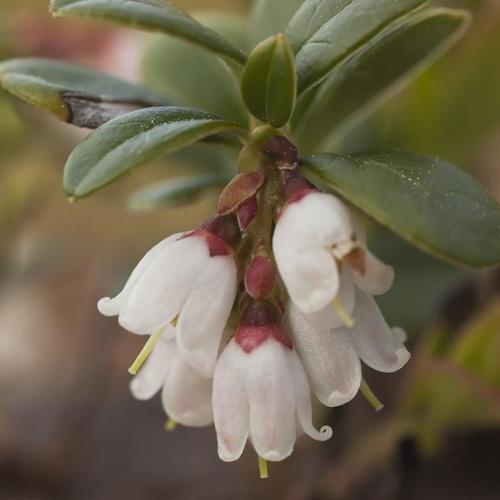 Fleur blanche liste ooreka - Fleur blanche longue tige ...